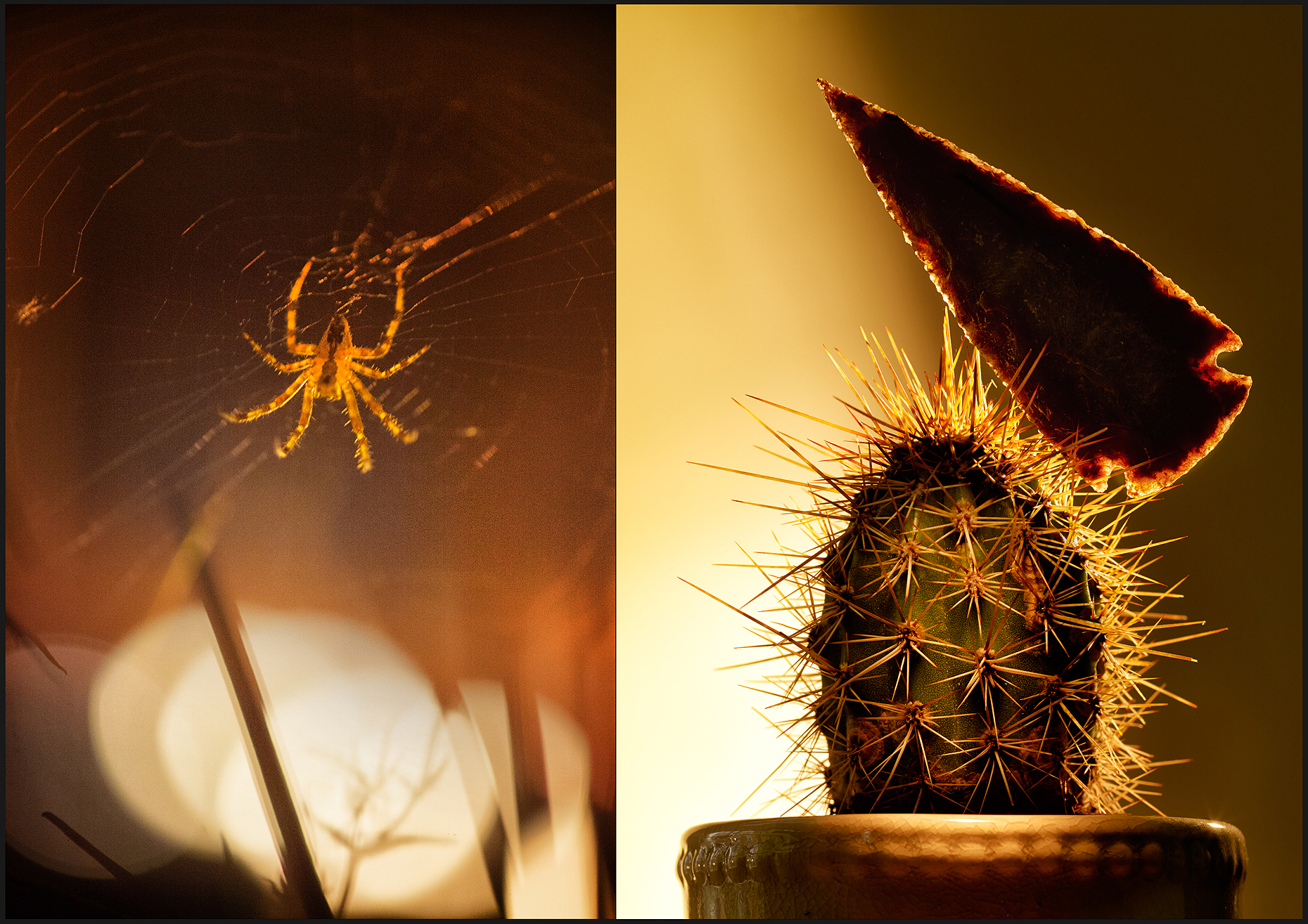 spider-and-catus-AP